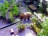 Symbol Bernu - Medvěd